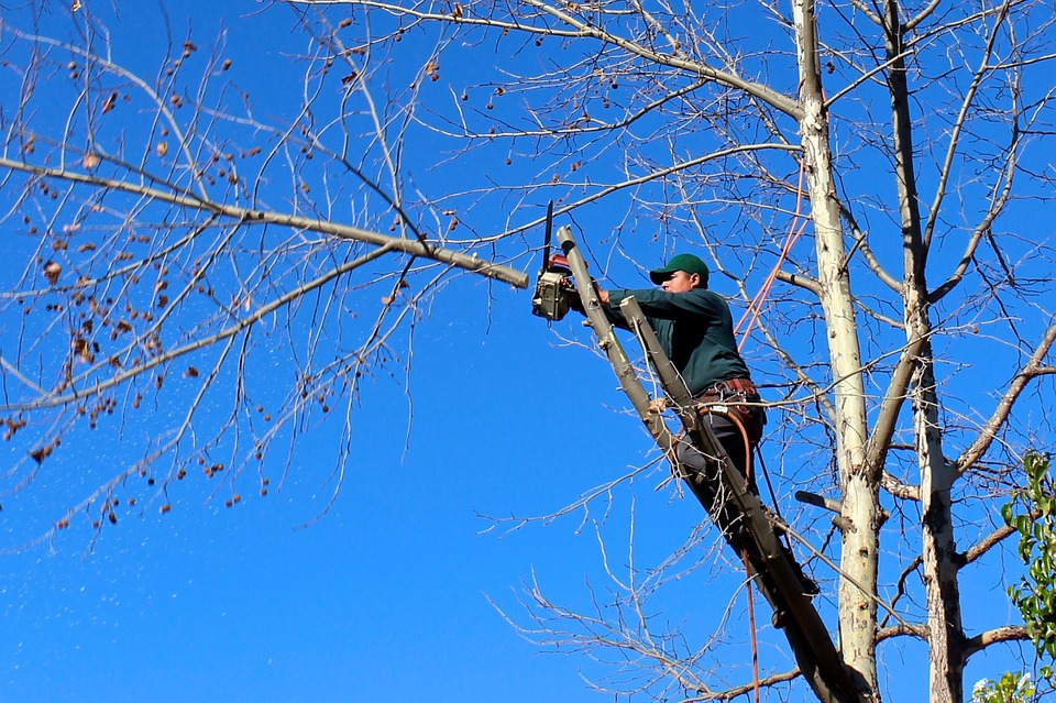 Les différents travaux relatif à l'élagage d'arbre